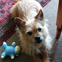 Beverly Holistic Health Dog